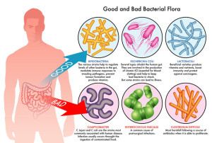 probiotics-diagram